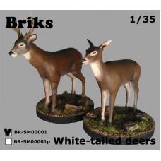 Белохвостые олени